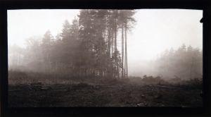MUO-016861: Šuma: fotografija