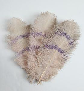 MUO-014365: lepeza od nojevog perja: lepeza