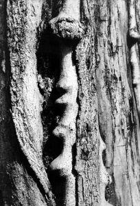 MUO-013038: Struktura 1965: fotografija