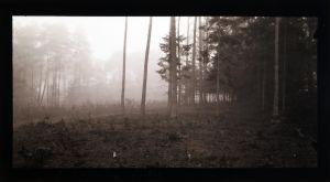 MUO-016860: Šuma: fotografija