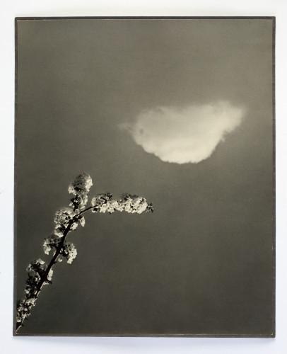 MUO-015738: Proljeće: fotografija